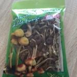 チャイナタウンでみつけた茶樹きのこ